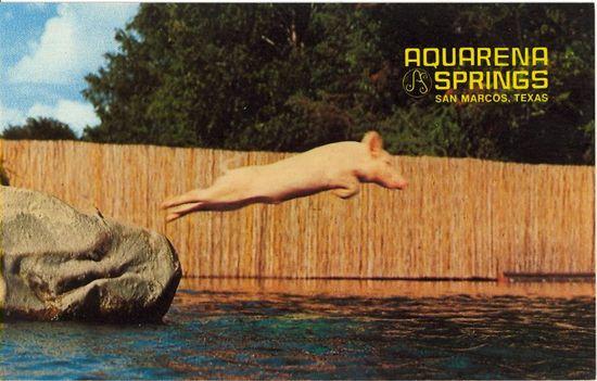 ralph diving pig